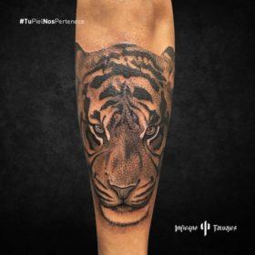tatuaje de tigre, tatuaje de tigre en el antebrazo, tatuajes en el antebrazo, infierno tatuajes, estudio de tatuajes
