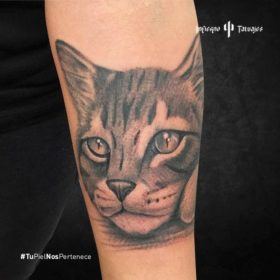 tatuaje de gato, tatuajes de animales, tatuajes de mascotas, estudios de tattoos, infierno tatuajes