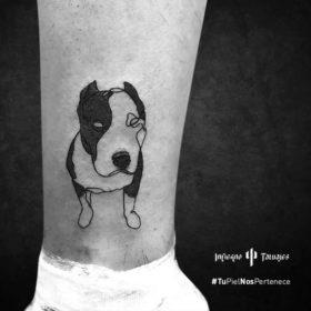 tatuaje pitbull, tatuajes de perros, tatuajes en la espinilla, tatuadores sur df, infierno tatuajes
