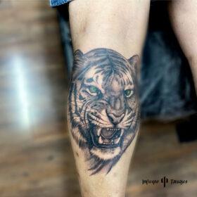 tatuaje grande de tigre en pantorrilla en blanco y negro